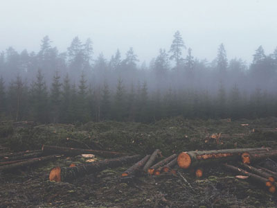 Si no detenemos la destrucción de la naturaleza, sufriremos pandemias cada vez peores