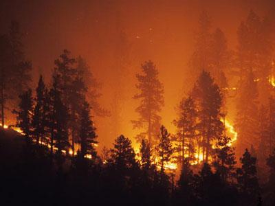 ¿Qué hacen las plantas después de un incendio forestal?